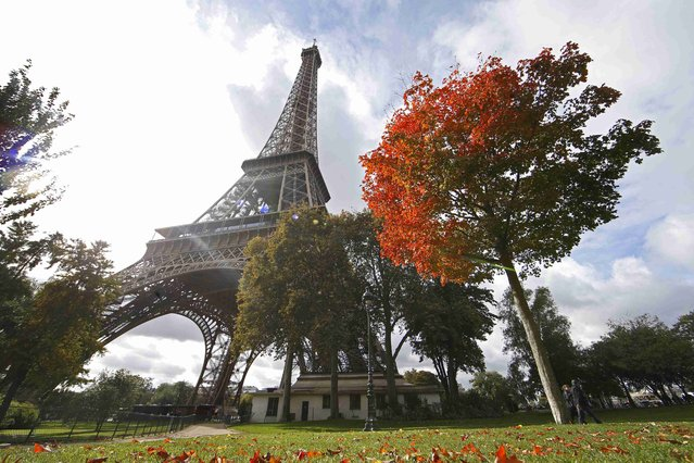The leaves of a tree have partially changed to display its autumn colors near the Eiffel Tower in Paris, France, October 7, 2015. (Photo by Jacky Naegelen/Reuters)