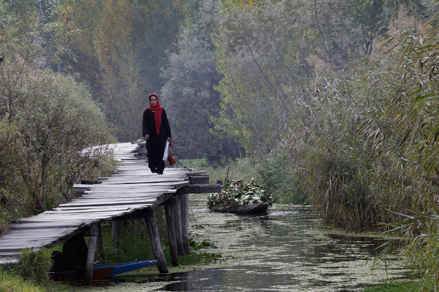 A Kashmiri woman walks on a footbridge in the interior of Dal Lake during autumn in Srinagar October 18, 2012. Footbridges and small boats are the only link between the shore and people residing in the interior of Dal Lake, the region's main tourist attraction. (Photo by Fayaz Kabli/Reuters)