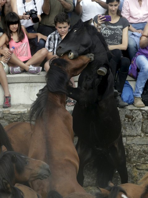 """Two horses fight during the """"Rapa das Bestas"""" traditional event in the village of Sabucedo, northwestern of Spain July 4, 2015. (Photo by Miguel Vidal/Reuters)"""