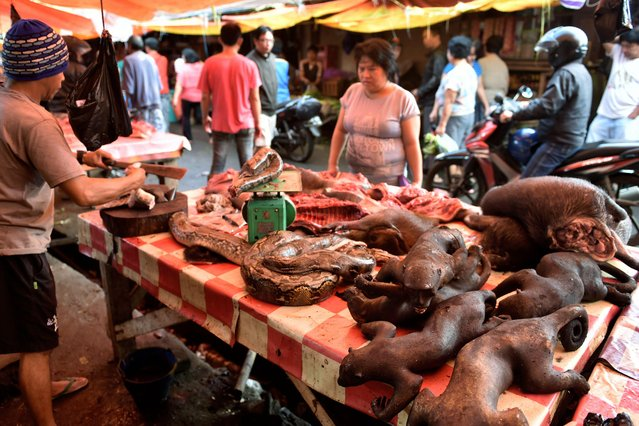 This picture taken on February 18, 2017 shows a vendor offering various animals, including pythons and crested black macaques, to his customers in Tomohon market in northern Sulawesi, Indonesia. (Photo by Bay Ismoyo/AFP Photo)