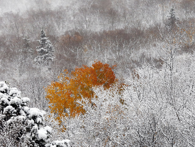 An overnight snow surrounds fall colors in Franconia Notch Sunday, October 23, 2016, in Franconia, N.H. (Photo by Jim Cole/AP Photo)