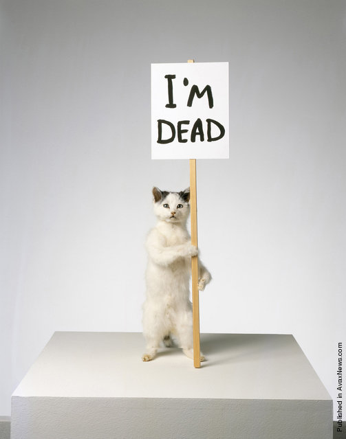 A taxidermied artwork of a cat entitled I'm Dead