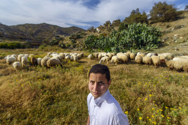 """""""Shepherd"""". This Child takes care of sheep after returning from school in the highest mountains of Bani Malik in Taif, Saudi Arabia. Photo location: Tiaif. (Photo and caption by Yousef Masoud/National Geographic Photo Contest)"""