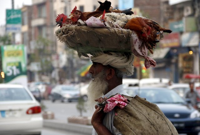 A chicken seller carries his chickens on his head in the market in Peshawar, Pakistan, August 20, 2015. (Photo by Khuram Parvez/Reuters)