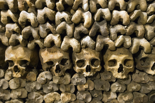 In this photo taken Tuesday, October 14, 2014, skulls and bones are stacked at the Catacombs in Paris, France. The subterranean tunnels, stretching 2 kilometers (1.24 miles), cradle the bones of some 6 million Parisians from centuries past and once gave refuge to smugglers. (Photo by Francois Mori/AP Photo)