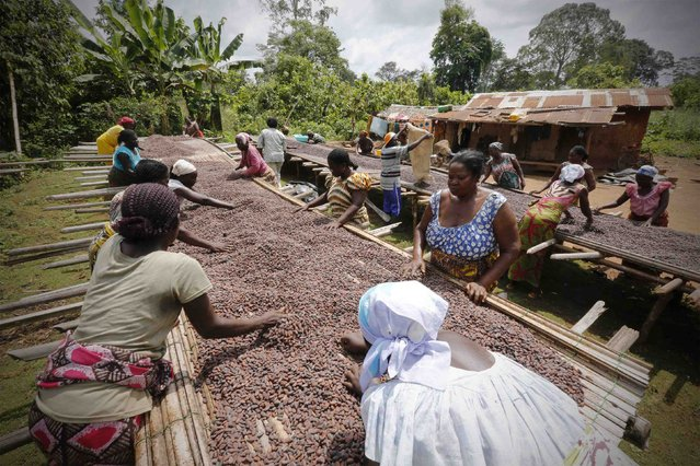 Women from a local cocoa farmers association called BLAYEYA work with cocoa beans in Djangobo, Niable in eastern Ivory Coast, November 17, 2014. (Photo by Thierry Gouegnon/Reuters)