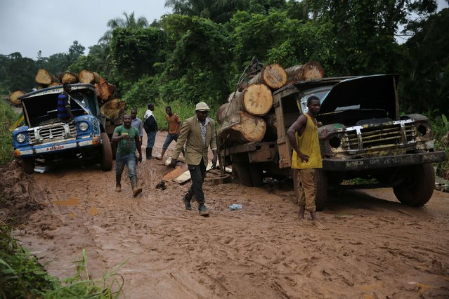 Labourers walk near trucks loaded with logs, which are trapped on a muddy road, near an unreserved forest in the village of Igbatoro, southwest Nigeria, August 28, 2014. (Photo by Akintunde Akinleye/Reuters)