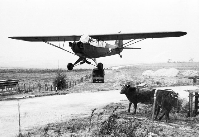 The cheapest military plane in the world has now arrived in this country to be used as an observation post replacing balloons of the last war; and called the Flying Jeep by Americans. The two-seater aircraft has a 65 H.P. engine and can land and take off on ordinary roads. This handy little machine answers to the name of Piper Cub and costs about $550 to build. This is a Flying Jeep dropping gently to earth in the space of about 40 yards, landing so quietly that the roadside cattle are quite unconcerned in England, December 27, 1942. (Photo by AP Photo)