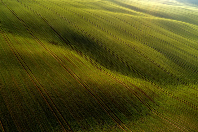 An aerial photo taken with a drone shows winter wheat fields near Abaliget, Hungary, 29 November 2020. (Photo by Tamas Soki/EPA/EFE)