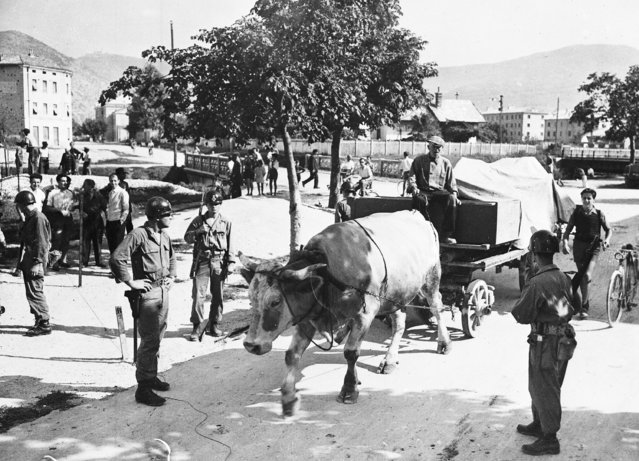 Two days before the ratification of the Italian Peace Treaty, a farmer with his ox cart, move all his possessions from territory to be ceded to Yugoslavia to an area under Italian control, September 13, 1947. (Photo by AP Photo)