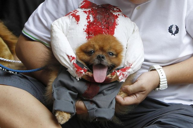 A pet owner holds his dog which is dressed in a headless costume during the Scaredy Cats and Dogs Halloween costume competition in Manila. (Photo by Romeo Ranoco/Reuters)