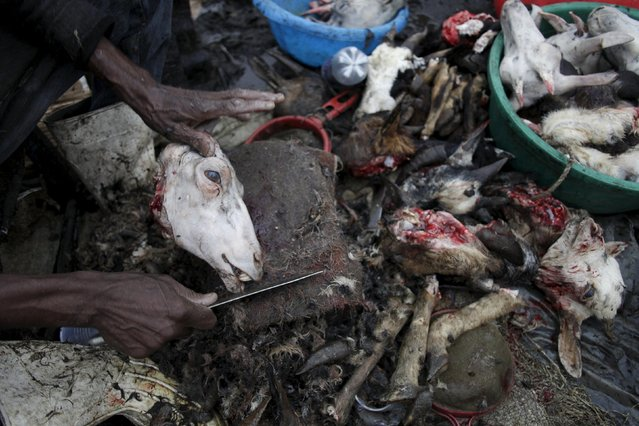 Jesner Sakage peels a goat head at La Saline slaughterhouse in Port-au-Prince, Haiti, March 20, 2015. (Photo by Andres Martinez Casares/Reuters)