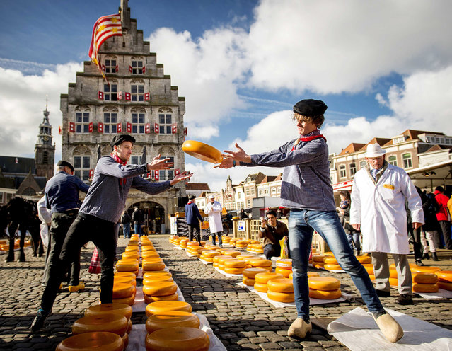 The Dutch cheese season is opened at the first Gouda cheese market of the year in Gouda, The Netherlands, 02 April 2015. On the market the cheeses are traded which are still made in the traditional way in the area around the city. (Photo by Koen van Weel/EPA)
