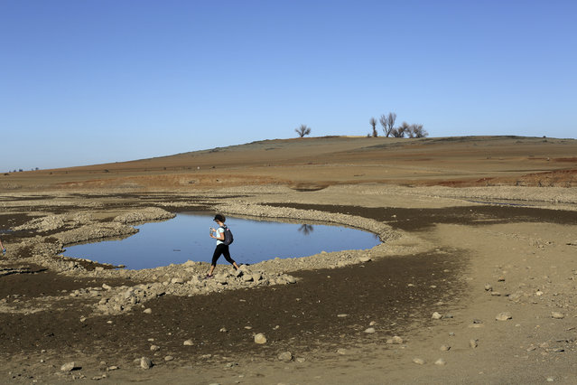 A visitor walks near the receding waters at Folsom Lake, which is 17 percent of its capacity, in Folsom, January 22, 2014. (Photo by Robert Galbraith/Reuters)