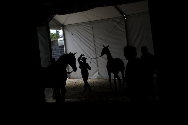 Andalusian men leave the arena with their Spanish thoroughbred horses after a form contest during the Sacab Andalusian Horse Show in Coin, southern Spain, April 12, 2015. (Photo by Jon Nazca/Reuters)