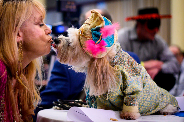An owner kisses her dog, dressed up for a show, during the 16th annual New York Pet Fashion Show on February 7, 2019 in New York City. (Photo by Johannes Eisele/AFP Photo)