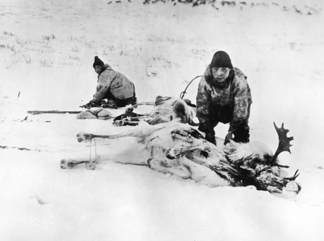 Two Inuit hunters in Canada strip the meat from a pair of reindeer carcasses, March 1924. (Photo by Topical Press Agency/Hulton Archive/Getty Images)