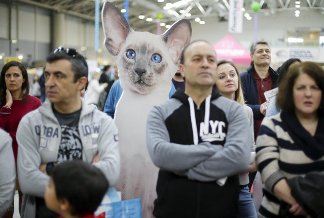 A billboard of a cat is seen among the crowd during the prize ceremony at the Mediterranean Winner 2016 cat show in Rome, Italy, April 3, 2016. (Photo by Max Rossi/Reuters)