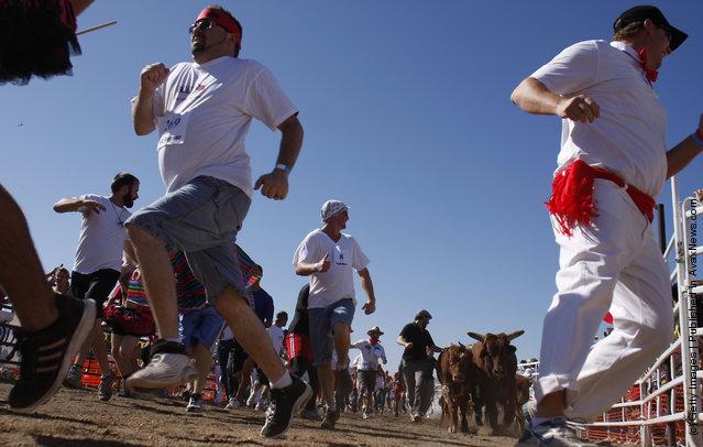 Arizona's Running Of The Bulls