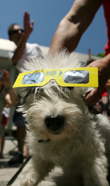 A playful owner puts protective glasses onto his dog during a total solar eclipse near the Bulgarian's Black sea town of Varna east of the capital Sofia, Friday, Aug. 1, 2008. The rare total solar eclipse will be seen across much of eastern Europe during Friday although some areas are expected to be cloudy. (Photo by Petar Petrov/AP Photo)
