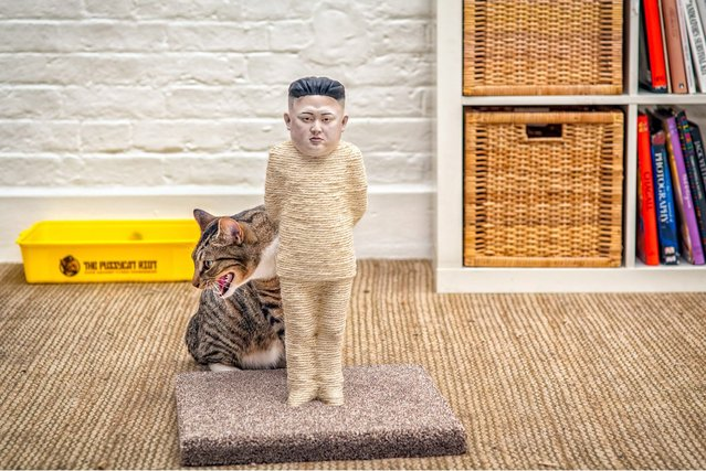 The claws are out for North Korean dictator Kim Jong-un and Russia's Vladimir Putin – as cats now able to use a model of him as a scratching post. And moggies can also maul at Russian president Vladimir Putin, whose face also features on the new cat toys which are 1.5ft tall and cost £4,500. They are made from hessian rope, and 3D-printed faces are then attached to the posts, before they are handpainted. The toys took a team of artists 200 hours to finish. (Photos by The Pussycat Riot)