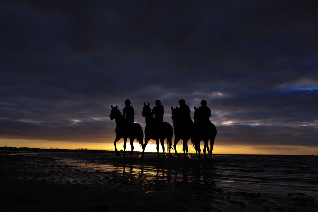 Horses from the Gai Waterhouse stable Forever Loved, Diamond Drille, Ryker and Wadjina head out for a beach work session at Altona Beach on October 17, 2014 in Melbourne, Australia. (Photo by Vince Caligiuri/Getty Images)