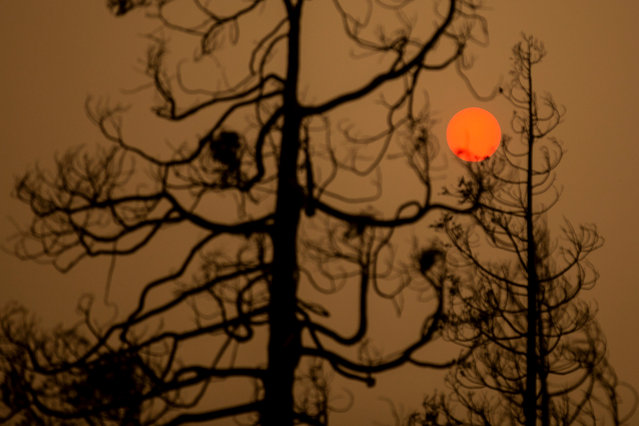 The sun shines red in the smoke of the Creek Fire near Shaver Lake, in the Sierra National Forest, California, USA, 08 September 2020. According to reports, the Creek Fire has burnt over 145,000 acres of forest. (Photo by Etienne Laurent/EPA/EFE)