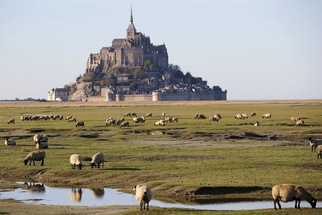 Sheep graze in a marsh field in Le Mont-Saint-Michel, France, October 31, 2015. (Photo by Stephane Mahe/Reuters)