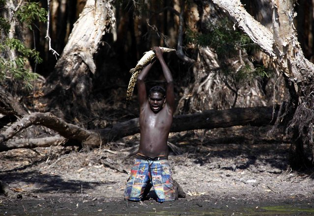 """Australian Aboriginal hunter Marcus Gaykamangu of the Yolngu people lifts a baby crocodile above his head after capturing it at a billabong near the """"out station"""" of Yathalamarra located on the outksirts of the community of Ramingining in East Arnhem Land November 22, 2014. (Photo by David Gray/Reuters)"""