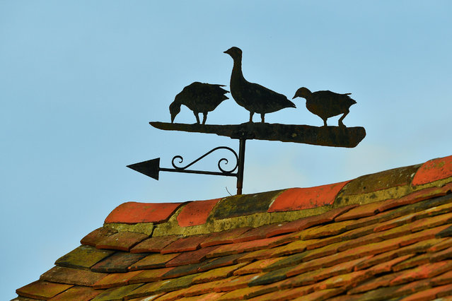 "A weather vane on a farm building close to the HS2 line on November 24, 2020 in Great Missenden, England. HS2 protesters continue to occupy key infrastructure sites along the proposed HS2 route claiming that the project is ""the most carbon-intensive and environmentally destructive project in UK history"". (Photo by Jim Dyson/Getty Images)"