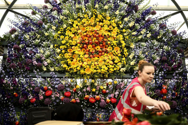 A worker adds flowers to a display as she prepares for the RHS Chelsea Flower Show in London, Britain on May 20, 2018. (Photo by Simon Dawson/Reuters)