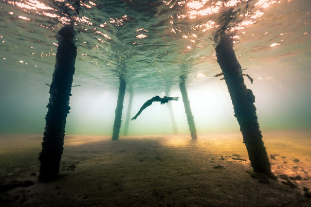 A diver swims in the shallow water under a pier. (Photo by Alex Voyer/Caters News Agency)