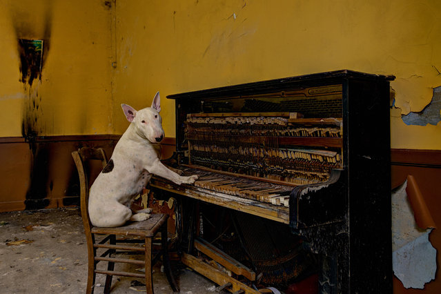Claire plaiyng the piano in an abandoned Cafe in Luxembourg. (Photo by Alice van Kempen/Caters News)