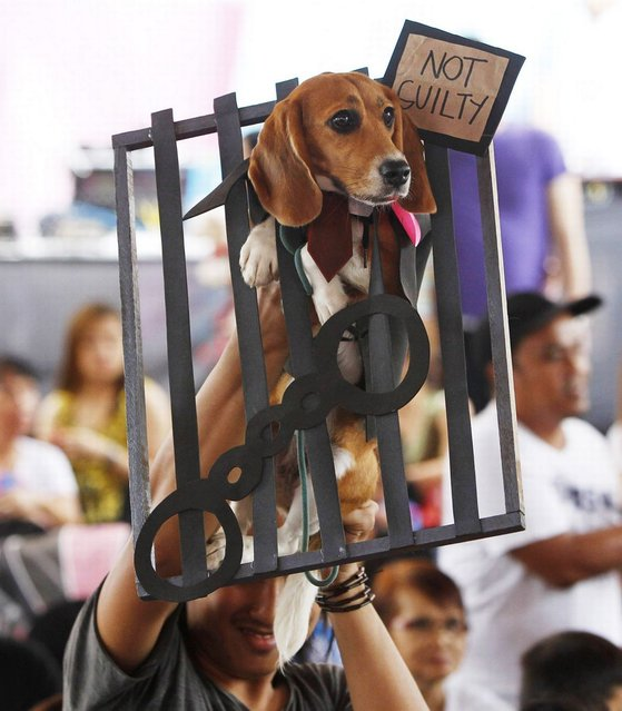 A pet owner holds up his dog dressed like a prisoner in jail during the Scaredy Cats and Dogs Halloween costume competition in Manila. (Photo by Romeo Ranoco/Reuters)