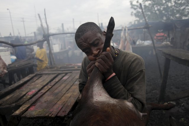 A butcher blows the skin of a goat at La Saline slaughterhouse in Port-au-Prince, Haiti, March 20, 2015. (Photo by Andres Martinez Casares/Reuters)