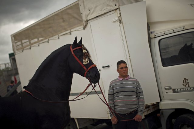 A man stands with a Friesian horse named Camaron, before a classical dressage contest during the Sacab Andalusian Horse Show in Coin, southern Spain, April 12, 2015. (Photo by Jon Nazca/Reuters)