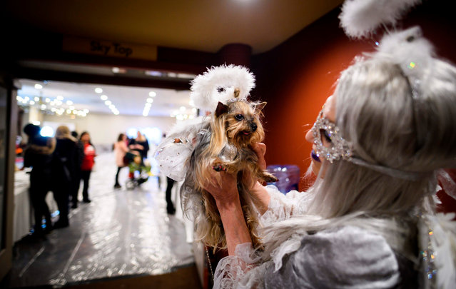 An owner holds her dog, dressed up for a show, backstage at the 16th annual New York Pet Fashion Show on February 7, 2019 in New York City. (Photo by Johannes Eisele/AFP Photo)