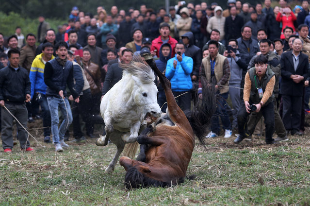 People watch a traditional local horse fight event held by the Miao ethnic minority in Rongshui county, Guangxi Zhuang Autonomous Region, February 24, 2016. Picture taken February 24, 2016. (Photo by Reuters/Stringer)