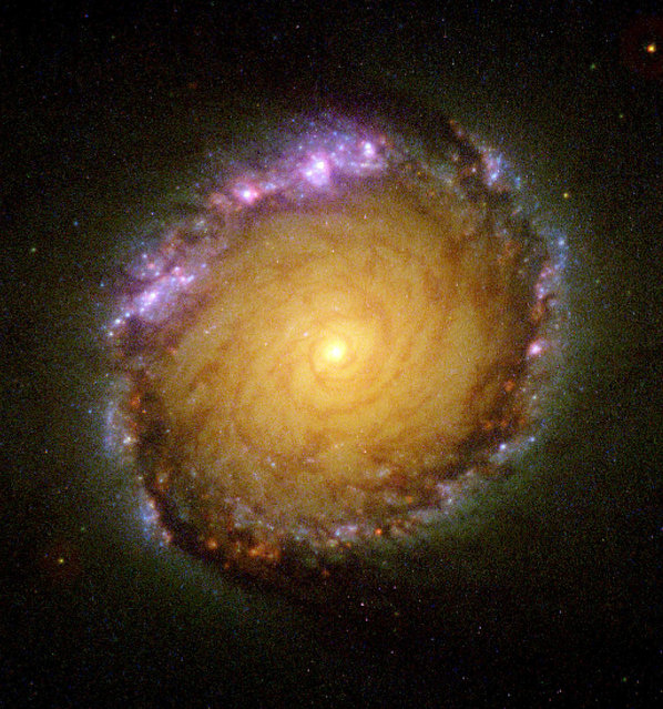 An image of galaxy NGC 1512 showing a  monster area - 2,400 light-years across – filled with clusters of infant stars. (Photo by Reuters/NASA)