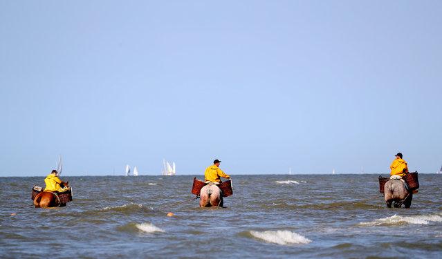 Belgian shrimp fishermen ride their horses in the sea in the coastal town of Oostduinkerke, Belgium on July 29, 2019. (Photo by Yves Herman/Reuters)