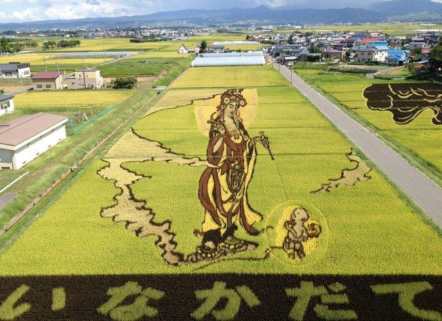 Rice Paddy Art
