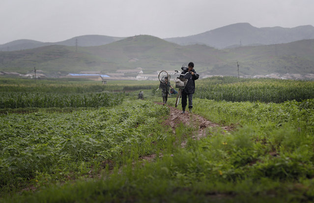 A man and woman carry their bicycle through farm fields, Saturday, July 25, 2015, in Pyongsong, North Korea. North Korea may be facing a poor harvest and possible food shortages due to unusually light rainfall in some parts of the country so far this year. (Photo by Wong Maye-E/AP Photo)