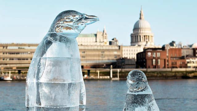 Penguin ice sculptures appeared on the shore of the Thames in London, England on February 10, 2020. This is part of a Greenpeace campaign for global awareness to protect the oceans and marine life. (Photo by David Mirzoeff/PA Wire Press Association)