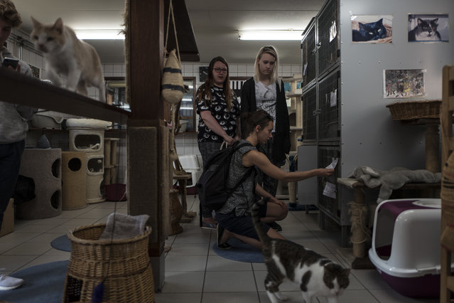 In this Thursday, August 3, 2017 photo, tourists from Finland visit the Catboat shelter in Amsterdam, Netherlands. (Photo by Muhammed Muheisen/AP Photo)
