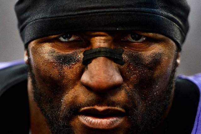 First Place, Sports Photojournalist Of The Year. One of 24 photos by Patrick Smith, freelance for Getty Images:  Ray Lewis of the Baltimore Ravens looks on during his final home game, after defeating the Indianapolis Colts in the AFC Wild Card Playoff Game at M&T Bank Stadium in Baltimore, Maryland. (Photo by Patrick Smith)