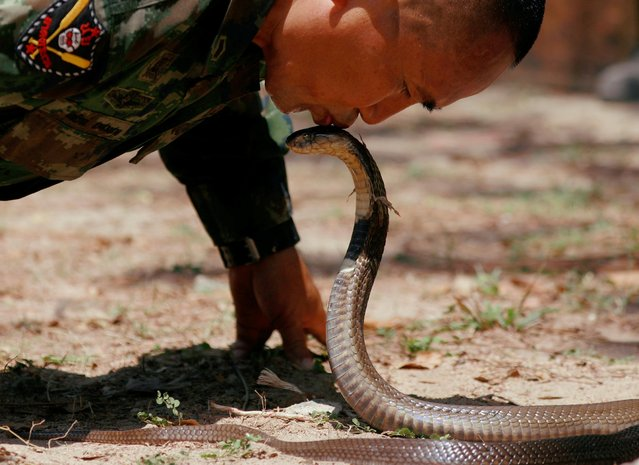 An instructor kisses a cobra before he kills it during the Cobra Gold multilateral military exercise in Chonburi, Thailand on March 4, 2020. (Photo by Soe Zeya Tun/Reuters)