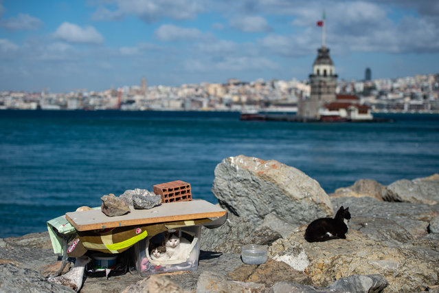 A photo shows a shelter for stray cats with Istanbul's Maiden's Tower in the background on April 8, 2020, after the government stepped up measures to stem rapidly growing coronavirus cases in Turkey but refused to impose a full lockdown. (Photo by Yasin Akgul/AFP Photo)