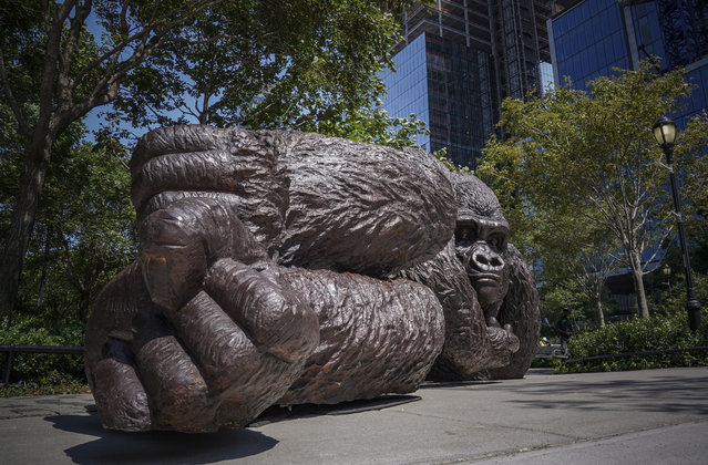 "A bronze gorilla sculpture titled ""King Nyani"" sits in the Bella Abzug park in Hudson Yards, Tuesday August 25, 2020, in New York. The sculpture, by artists Gillie and Marc Schattner, is meant to bring awareness to the endangered animals. (Photo by Bebeto Matthews/AP Photo)"