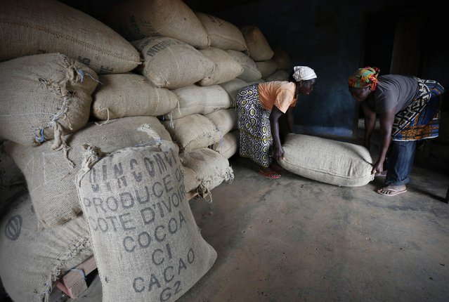 Women from a local cocoa farmers association called BLAYEYA lift a sack in a cocoa warehouse in Djangobo, Niable in eastern Ivory Coast, November 17, 2014. (Photo by Thierry Gouegnon/Reuters)