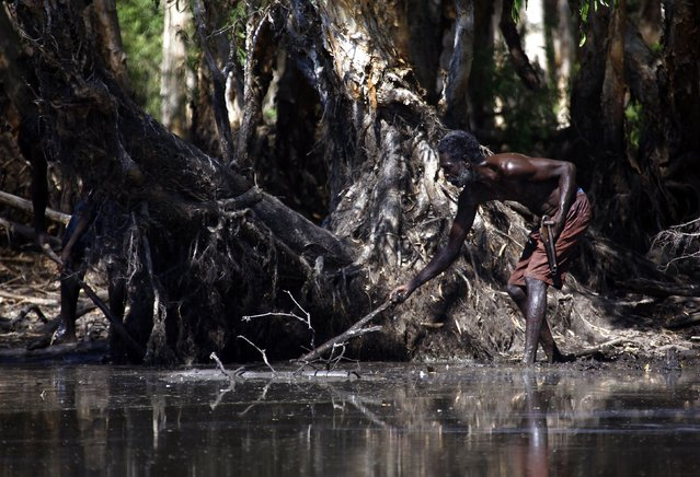"""Australian Aboriginal hunter Roy Gaykamangu of the Yolngu people uses a stick to try and find a crocodile he is hunting in a billabong near the """"out station"""" of Yathalamarra, located on the outksirts of the community of Ramingining in East Arnhem Land November 22, 2014. (Photo by David Gray/Reuters)"""